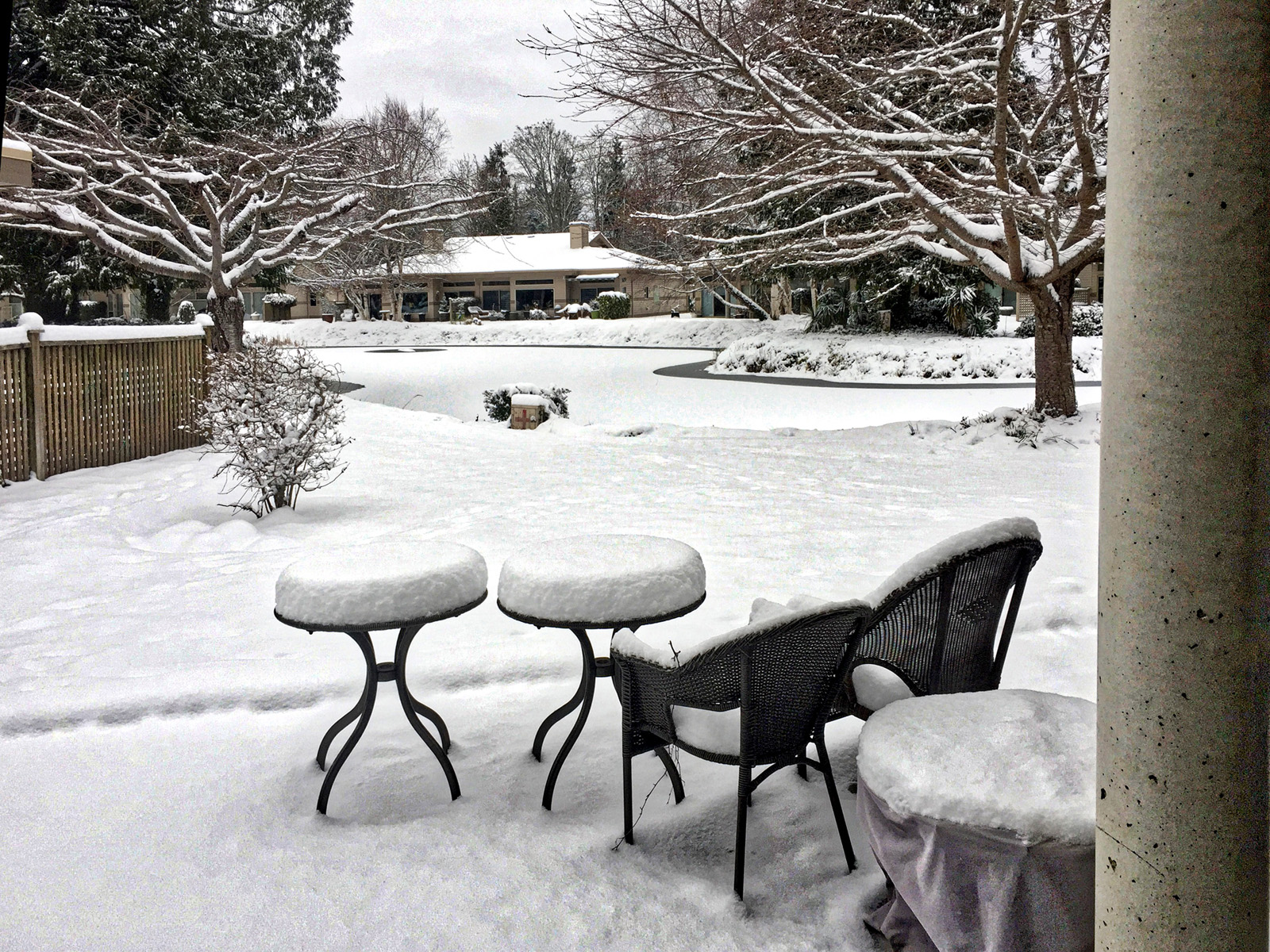 Backyard.jpeg